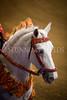 StunningSteedsPhoto-HR-5429