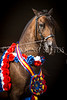 StunningSteedsPhoto-HR-1076