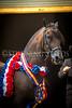 StunningSteedsPhoto-HR-1078