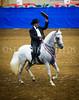 StunningSteedsPhoto-HR-0925-Performance Geldings 7 Years & Older-MENDOZA