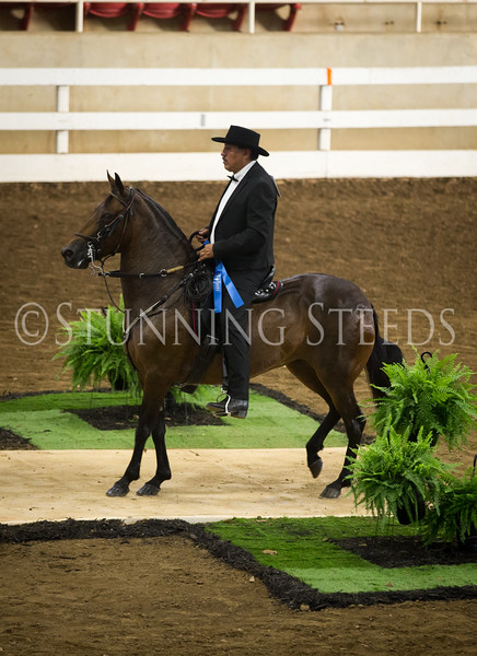 StunningSteedsPhoto-HR-3080