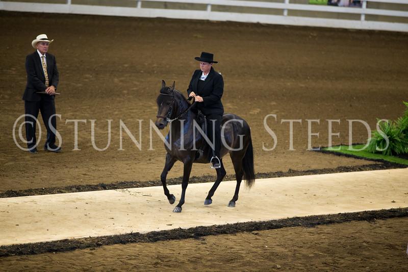 StunningSteedsPhoto-HR-2986