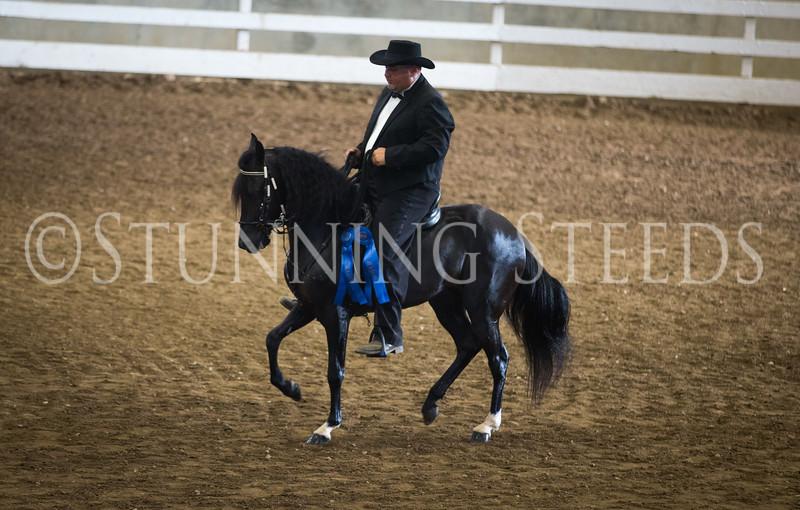 StunningSteedsPhoto-HR-3065