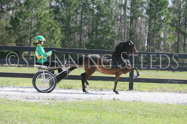 12 Road Pony