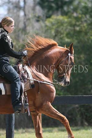 14 Western Pleasure Equitation wtc