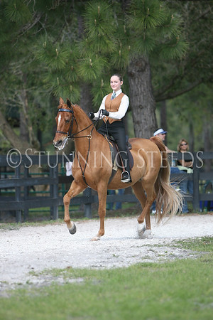 16 Academy saddleseat Equitation 14 & over wt
