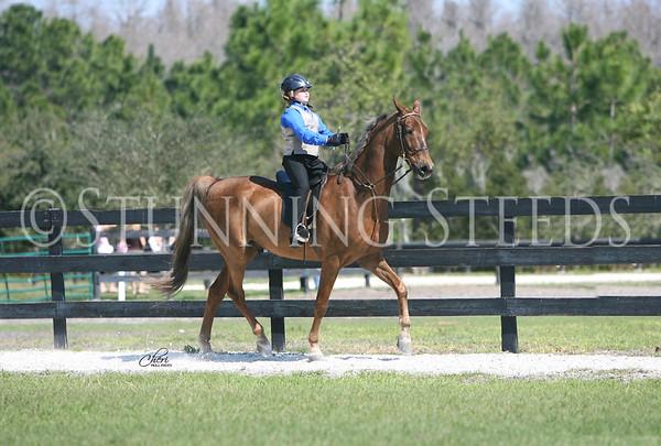 21 Academy saddleseat equitation 9-10 wt