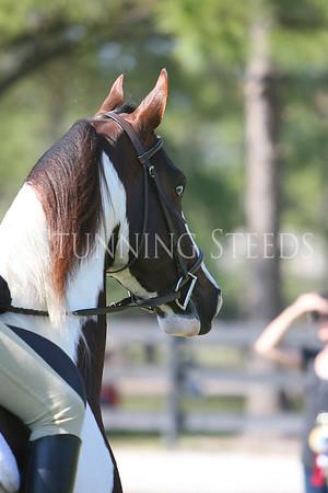 29 Huntseat Equitation wt