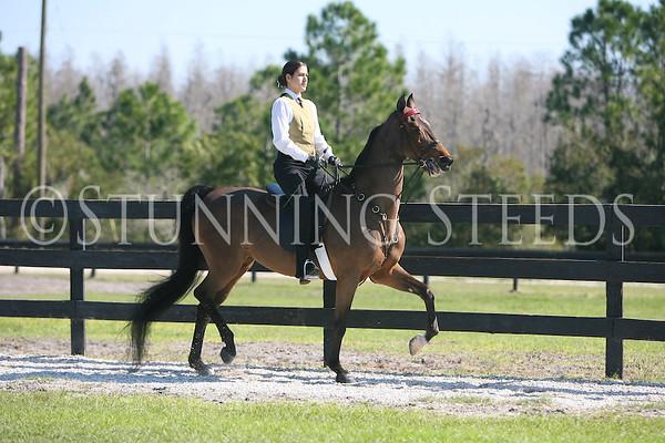 5 Academy Saddleseat 14 & over wtc