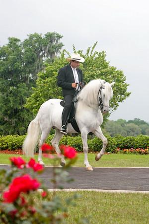 Auction & Horses