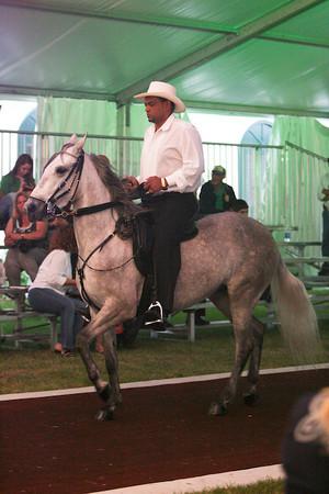 Best of Besilu - Saddle Class