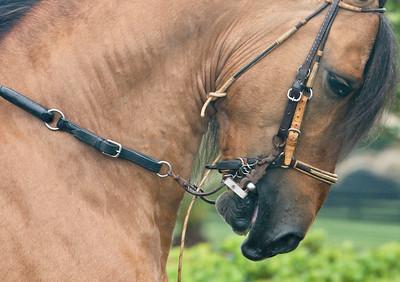 Stallion Exhibition