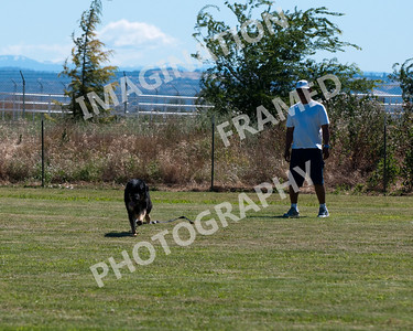 dogstock2010-2651