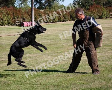 dogstock2010-1295