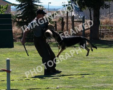 dogstock2010-2686