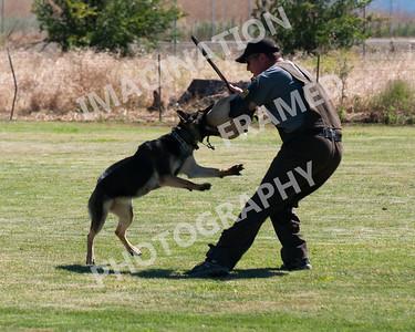 dogstock2010-2678