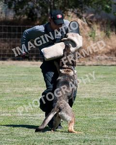 dogstock2010-3152