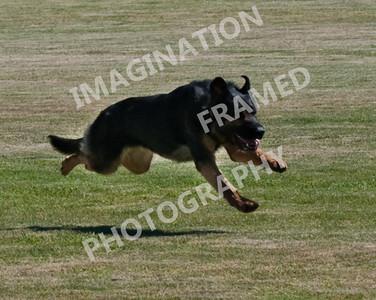 dogstock2010-2719