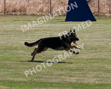 dogstock2010-2675