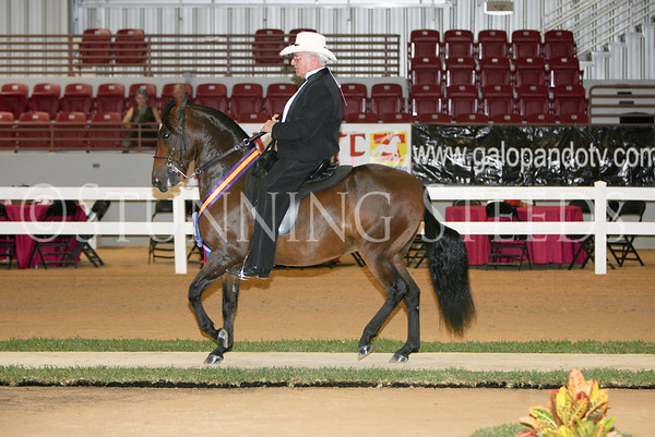 15 Non-Pro Classic Fino Geldings 61 months & older