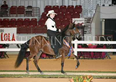 22 Non-Pro Performance Schooling Fillies 36-60 months