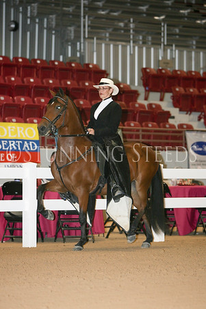 34 Non-Pro Trote & Galope Geldings, Colts & Stallions