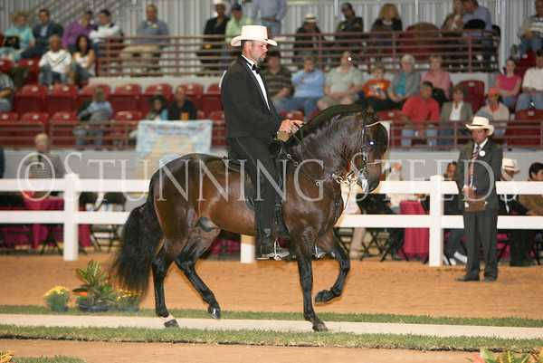 39 Classic Fino Schooling Colts 36-48 months
