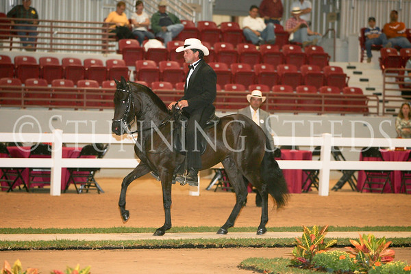 4 Performance Schooling Fillies 49-60 months
