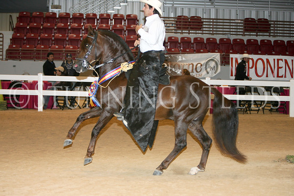 42 Trote & Galope Geldings, Colts & Stallions