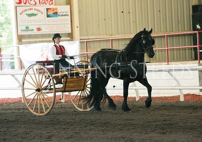 Driving - Friesian Stallion