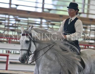 English Pleasure Andl Stallion