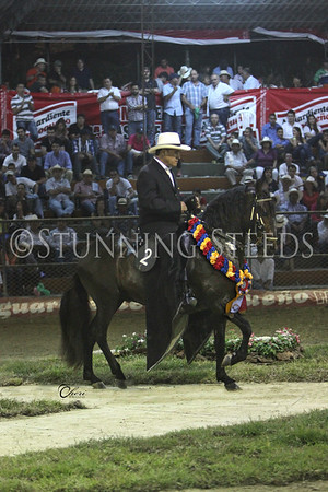 Gran Campeonato CABALLOS Paso Fino