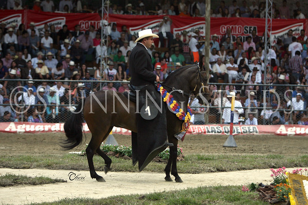 Gran Campeonato Paso Fino YEGUAS