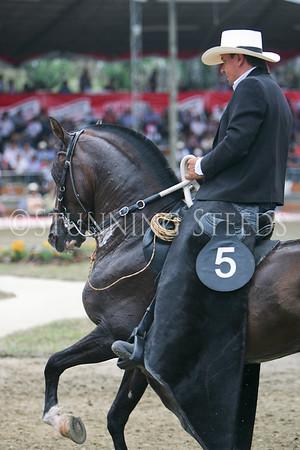 Trocha y Galope-48-60 stallions