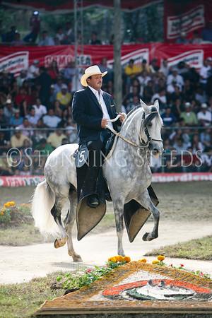 Trocha y Galope-60-78 stallions