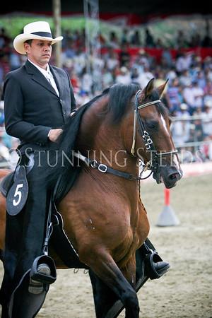 Trocha y Galope-Stallions