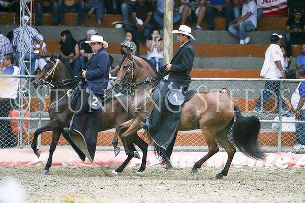 Trote y Galope-Yeguas De 42 A 48 Meses