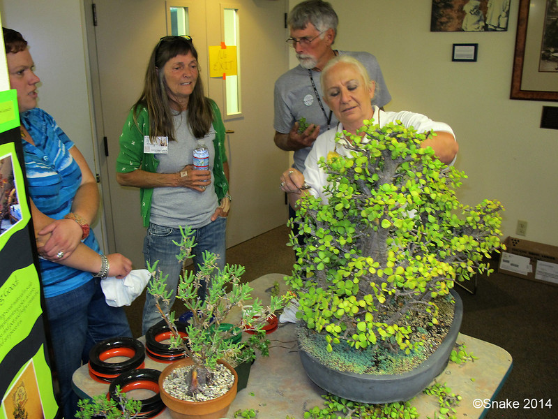 Ann brought in a bunch of plants and spent a lot of time explaining demonstrating bonsai training.  Through the efforts of  Ann and Kris, I expect this class to be much larger, and tougher, next year.