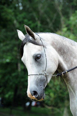 Colt foals 1 month and older