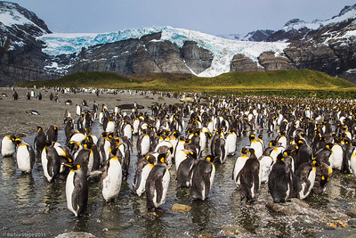 """The Gossip Waddle""  (King Penguins in Antarctica)  UMSL Gallery 210,  ""Far and Away""  from June 20 through Aug 8, 2015 with the Sharp Shooters Photography Collective. * June 20 , 5 pm-7 pm: Artists' Reception.  GALLERY 210 UNIVERSITY OF MISSOURI –ST. LOUIS, 44 Grobman Drive 