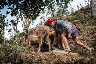 """Rooted in the Soil (Nepal)""  Regional Arts Gallery (RAC) in St Louis, MO - Generations / Evolution  with the Sharp Shooters Photography group -  April 24 to June 6, 2015  Opening Reception on Friday April 24 from 5:30 to 7:30 PM Gallery talk with the Sharp Shooters on Wed May 6 from 5:30 to 7 PM"