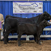 ResChamp_cow:calf_limflex-AUTO Mornin 214Y