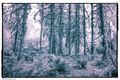 Manipulated  photo taken in the Olympic Peninsula in Washington state