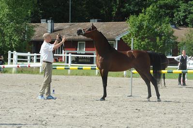 Stallions 4-7 years