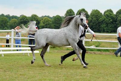 Stallions 7-10 years