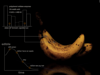 """Growth or Decay - """"The Banana Turns"""""""