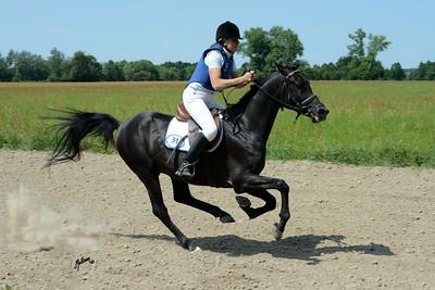 European Arabian Sporthorse Ch Janow Podlaski 2014