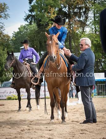 European Arabian Sporthorse Ch Janow Podlaski 2015