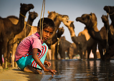 Camel Boy   (Pushkar Camel Fair, India)