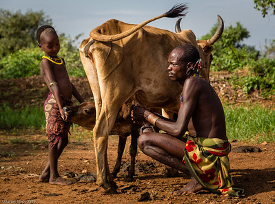 Milking the Cow  (Hamar Village near Turmi, Ethiopia)